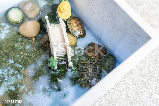 istock Children's self-made tortoise pond with sand, stones, toys and decorations 1297631752