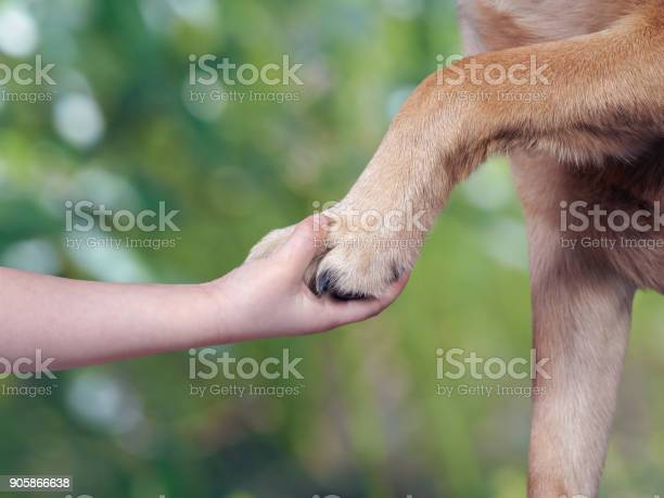 Childs hand and paw of dog picture id905866638?b=1&k=6&m=905866638&s=612x612&h=fgkwomlnfxg715xtsk988wiaciqbqqykuq7ubjanm6q=