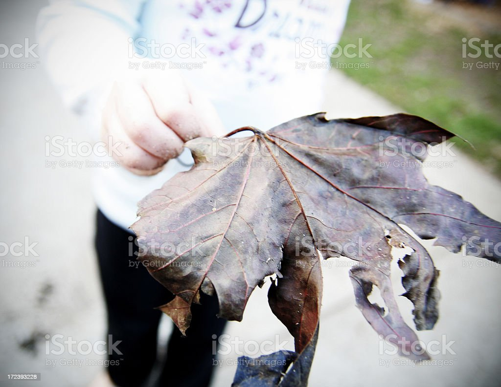 Child's Hand Exploring Nature royalty-free stock photo