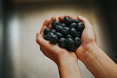 A child holding organic blueberries from a u-pick farm.