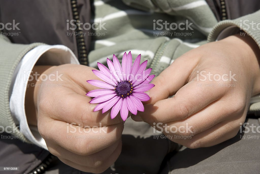 Childs hands holding a flower royalty-free stock photo
