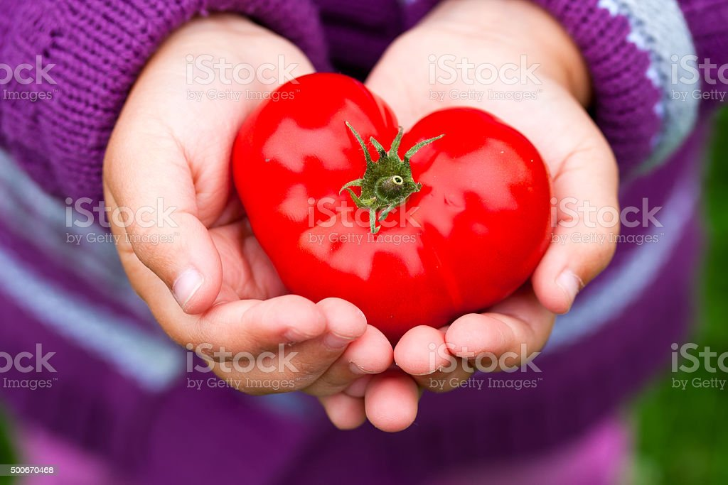Child's hands holding a heart shaped tomato. stock photo