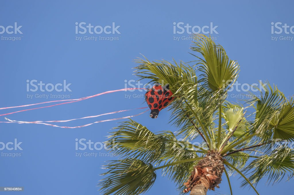 Childs Kite Hangs From A Tree At Shoreline Aquatic Park In