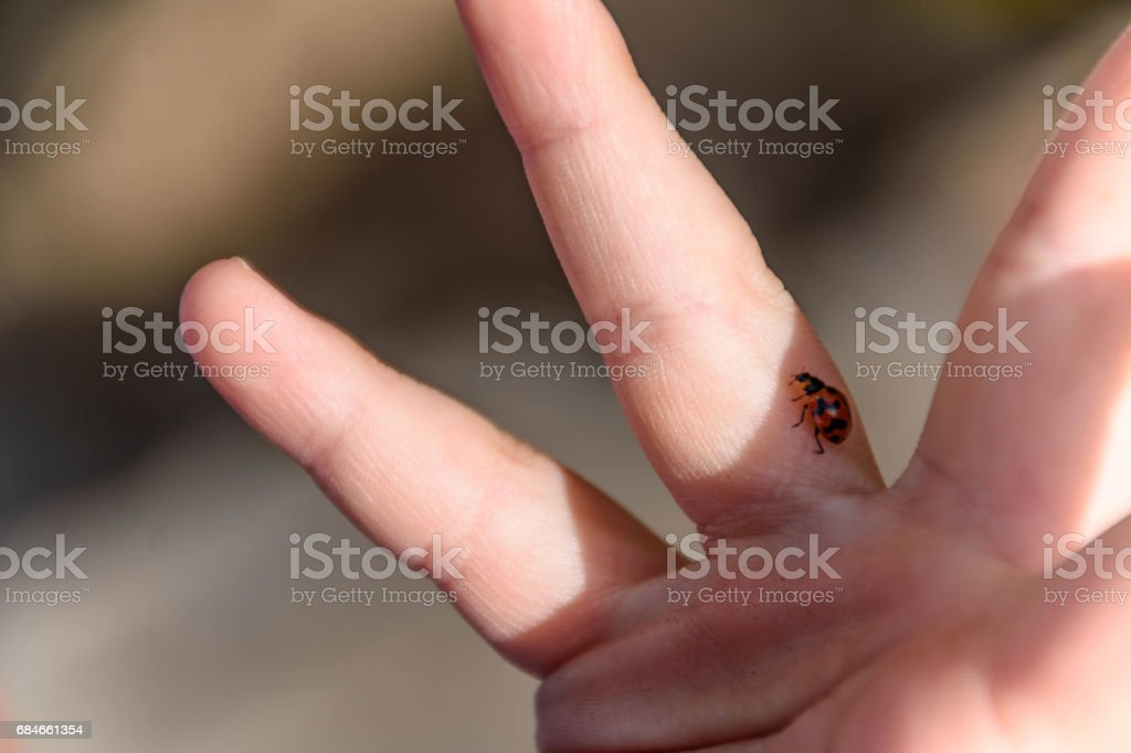 Childs Play - Ladybird and childs hand stock photo