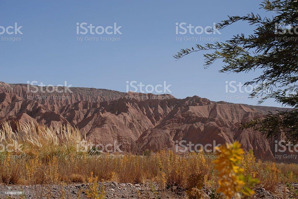 Chile, Desert Atacama  flora royalty-free stock photo