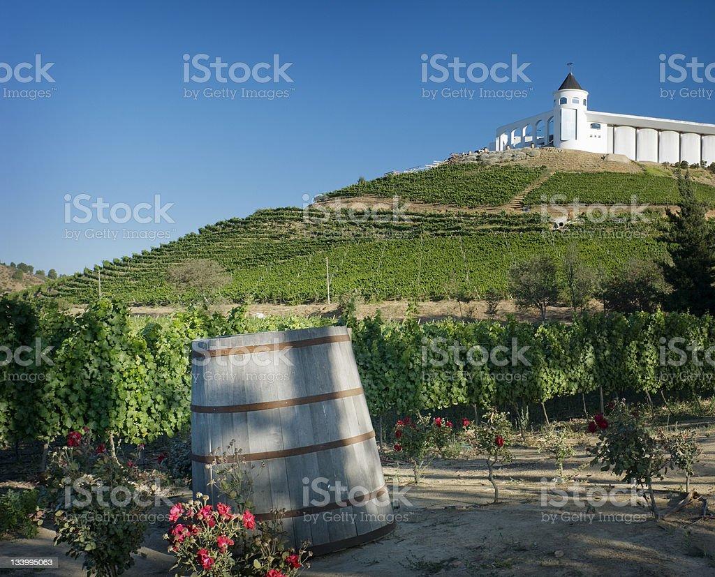 Chile Vineyard royalty-free stock photo