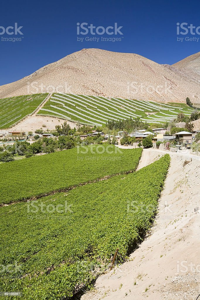 Chilean Vineyards in the Elqui Valley royalty-free stock photo
