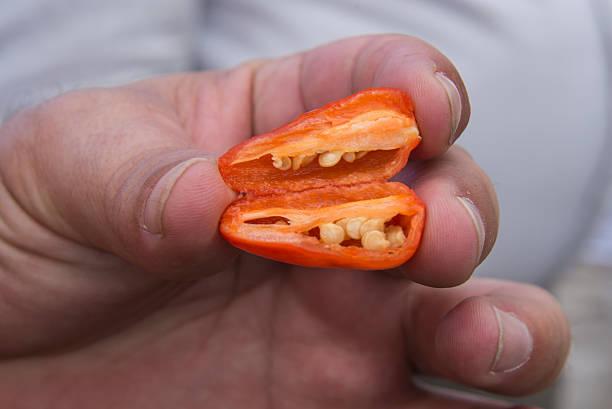 chili costa rica hand holding chili cut in half stock photo