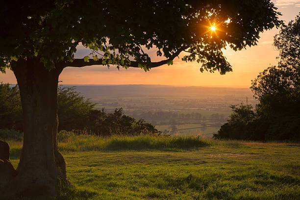 Chiltern Hills Sunset A view looking over the Vale of Aylesbury from the Chiltern Hills, Buckinghamshire, UK. The foreground tree is silhouetted by the sunset while droplets of water in the grass reflect the light. buckinghamshire stock pictures, royalty-free photos & images