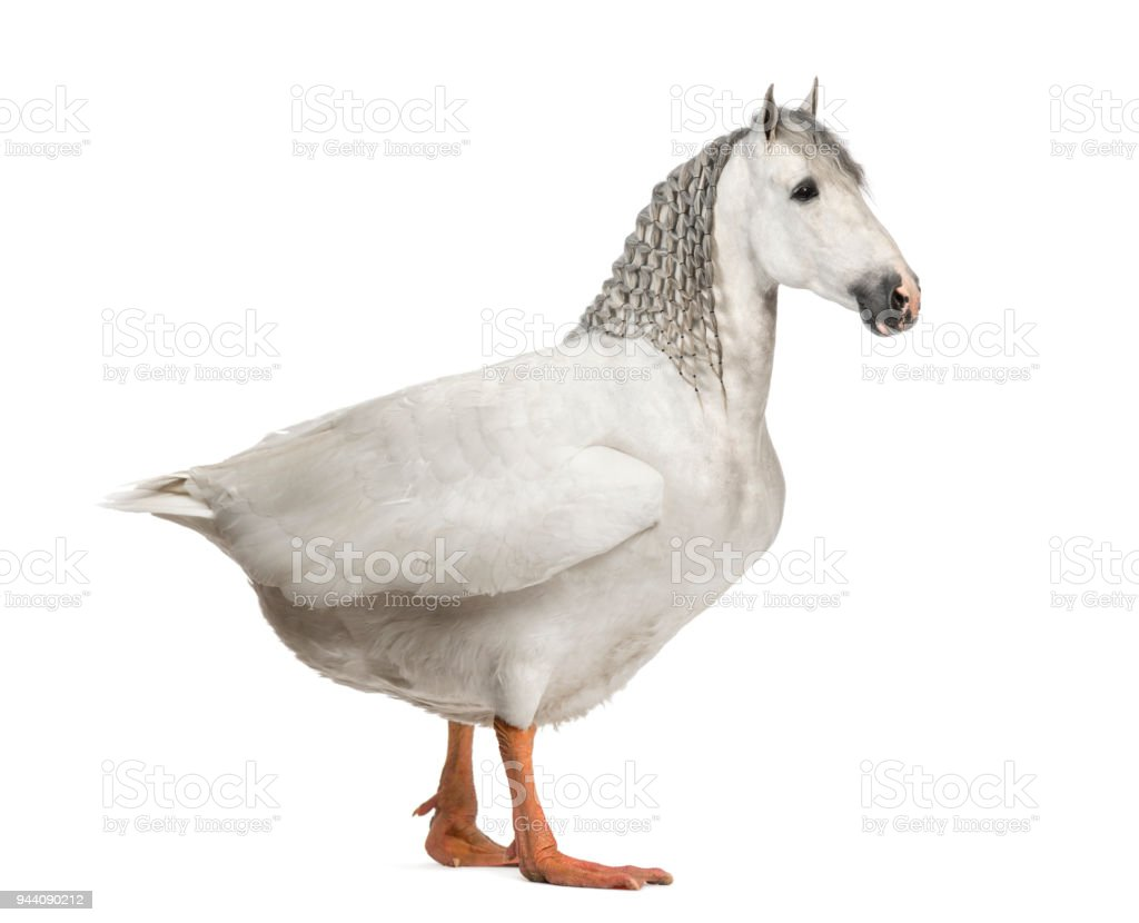 chimera with a horse and a body of a goose against white background stock photo