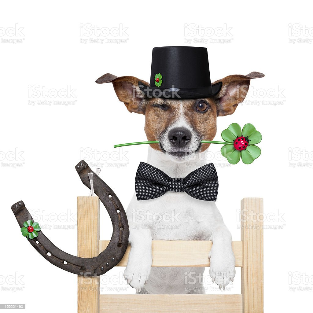 chimney sweeper dog royalty-free stock photo