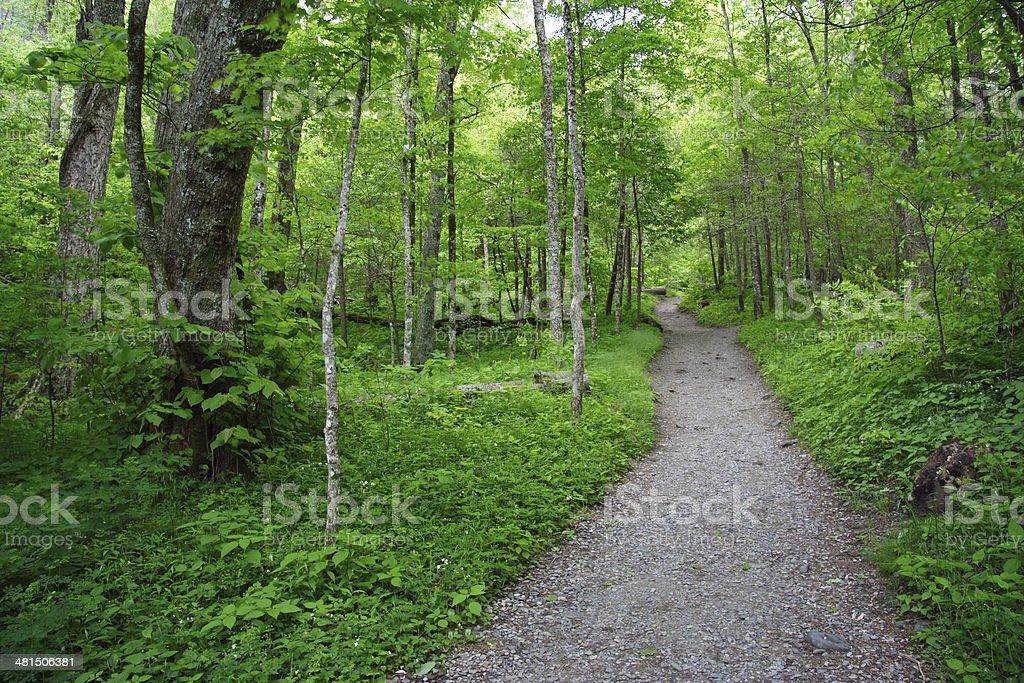 Chimney Tops Hiking Trail stock photo