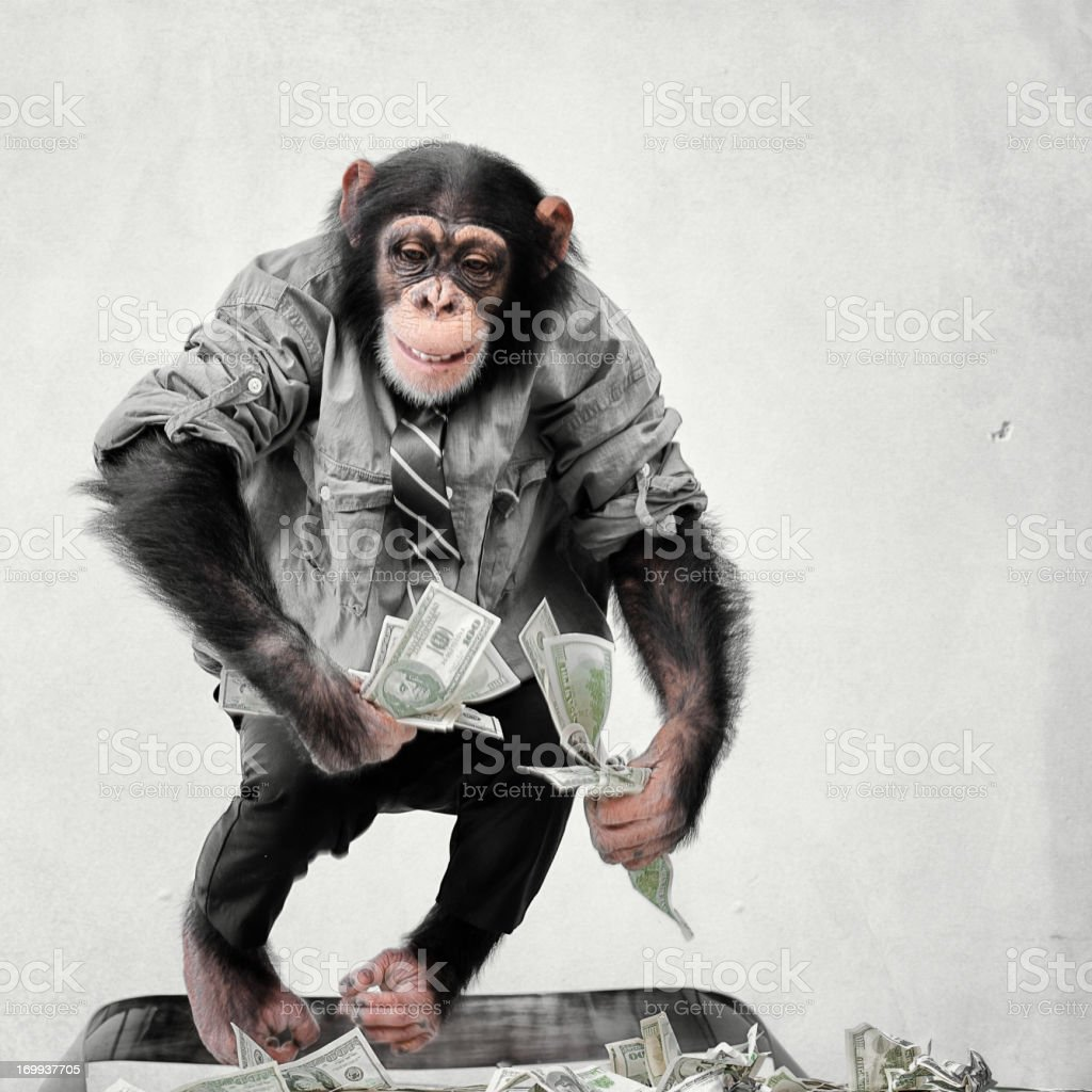 Chimp with cash stock photo