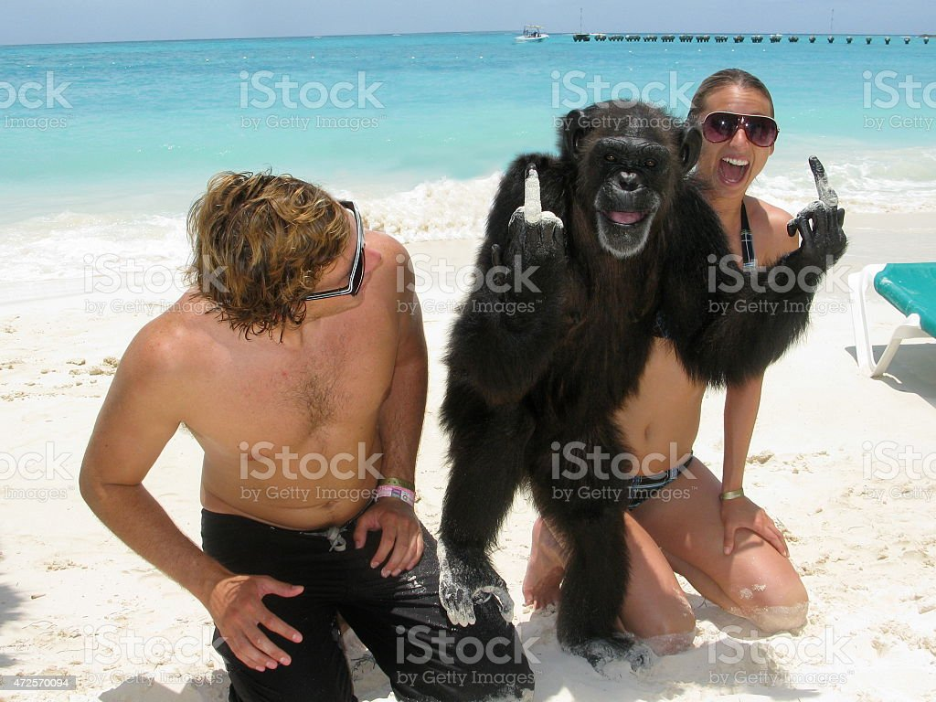 Chimpanzee Flipping Off the Camera in Cancun stock photo