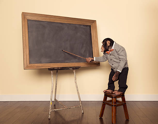 chimpanzee professor at the chalkboard - ape stock pictures, royalty-free photos & images