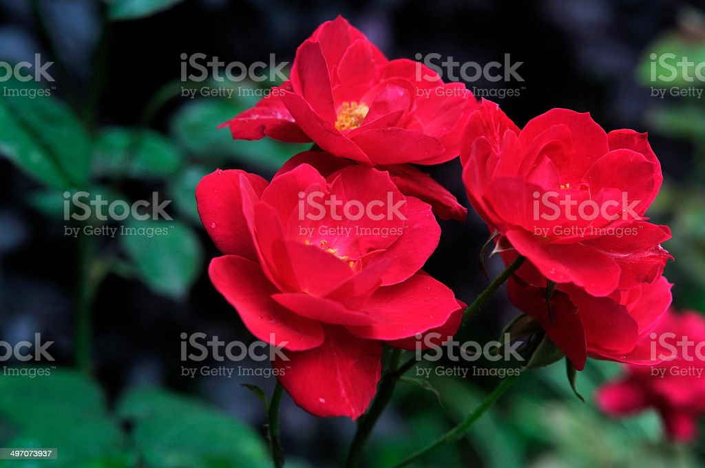 royalty free china pictures images and stock photos istock