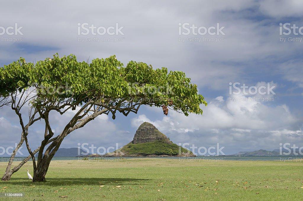 Chinaman's Hat Island framed by tree, Oahu, Hawaii stock photo
