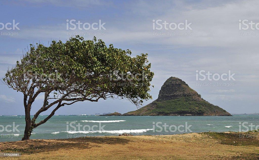 Chinaman's Hat Island stock photo