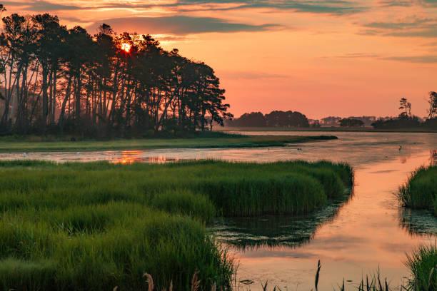chincoteague sunset - mokradło zdjęcia i obrazy z banku zdjęć