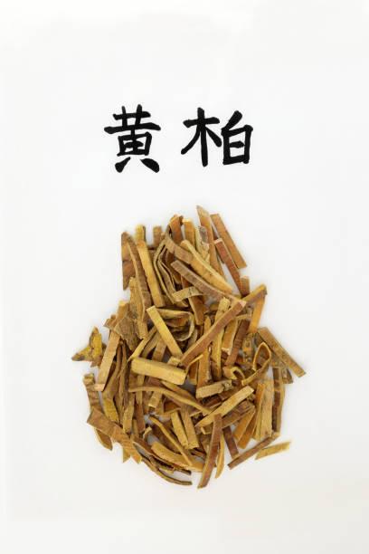Chinese Amur Cork Tree Bark Herb stock photo