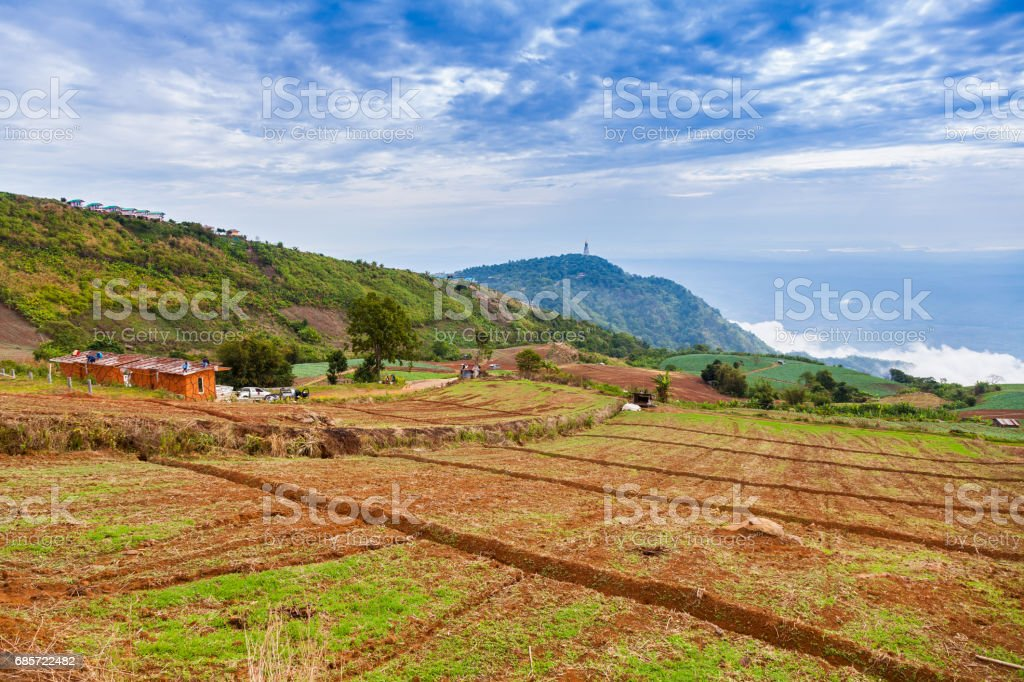 Chinese Cabbage Farm at North of Thailand 免版稅 stock photo