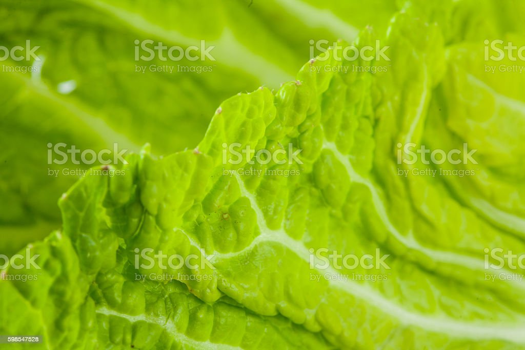 chinese cabbage  leaf background photo libre de droits