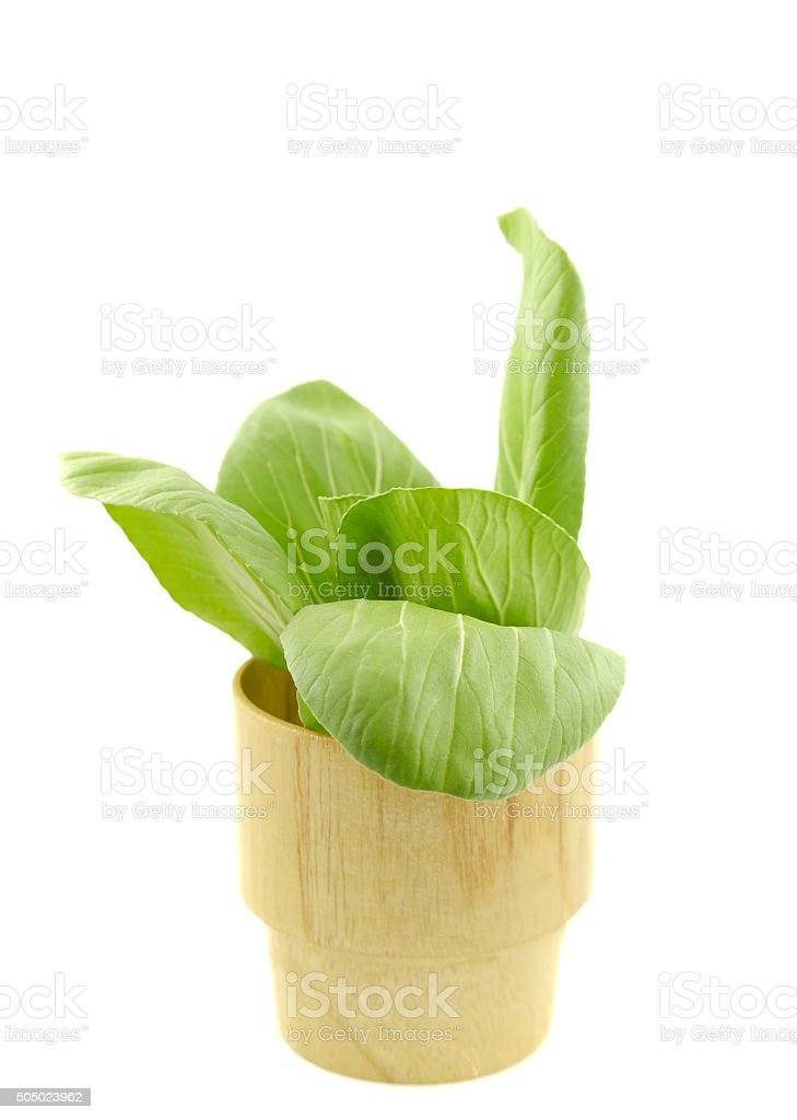 Chinese cabbage,Bamboo glass on white background. stock photo