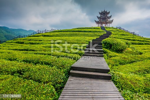 Chinese Classical Pagoda in Tea Garden