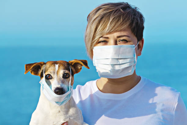 Chinese Coronavirus 2019-nCoV dangerous for pets Woman in protective surgical mask holds dog in face mask. Chinese Coronavirus 2019-nCoV dangerous for pets. domestic animals stock pictures, royalty-free photos & images