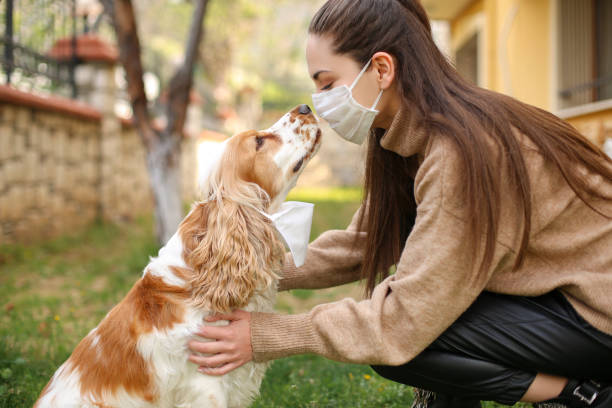 Chinese Coronavirus 2019-nCoV dangerous for pets Chinese Coronavirus 2019-nCoV dangerous for pets domestic animals stock pictures, royalty-free photos & images