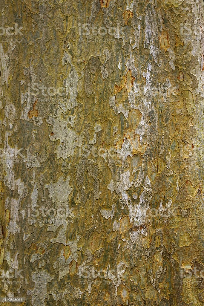 Chinese elm bark for background or wallpaper royalty-free stock photo