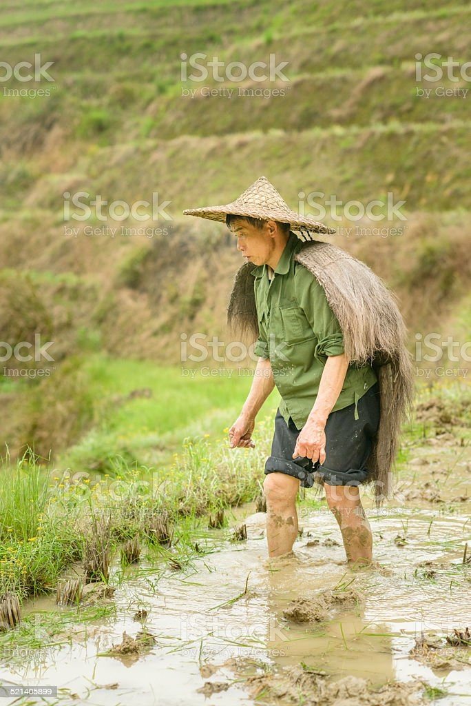 Chinese Farmer Dragons Back Rice Terraces stock photo