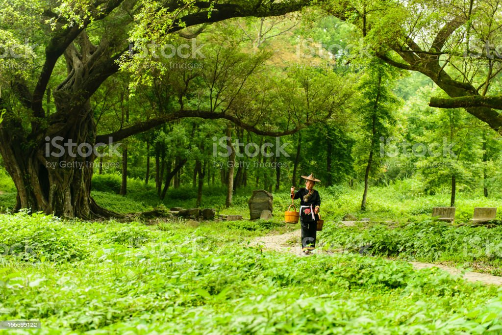 Chinese farmer stock photo
