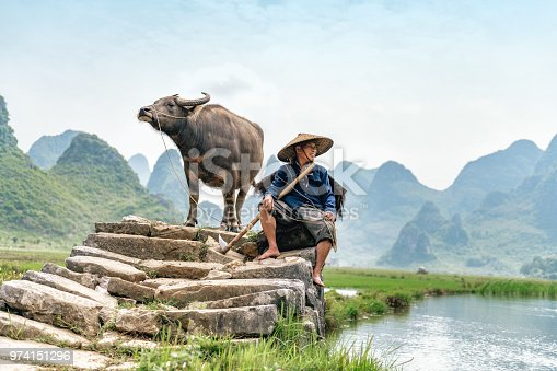 chinese farmer sitting with water buffalo on stone bridge in Guilin
