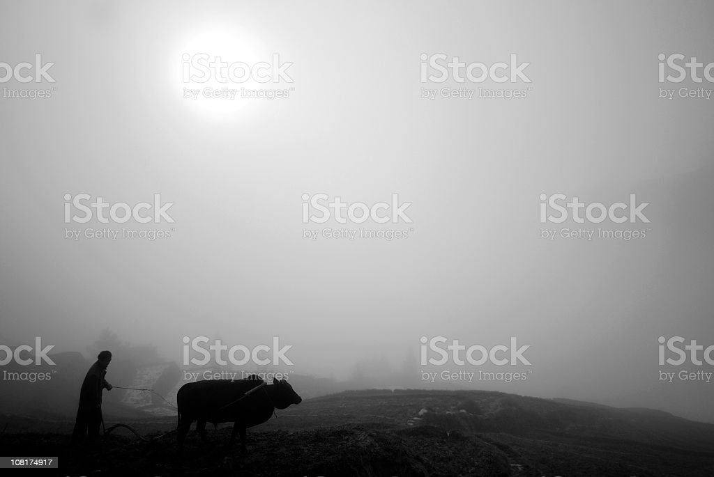 Chinese Farmer with Ox, Black and White royalty-free stock photo