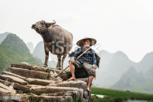 chinese farmer with water buffalo on stone bridge in Guilin