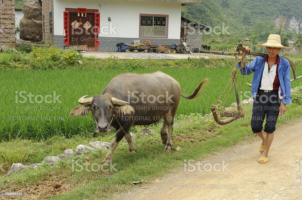 Chinese farmer with water buffalo stock photo