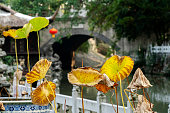 Chinese garden in Autumn:lotus leaf, pond and railing