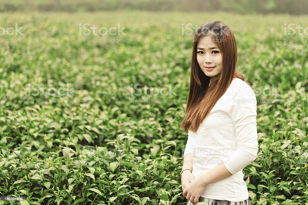 Chinese girl in the tea plantation royalty-free stock photo