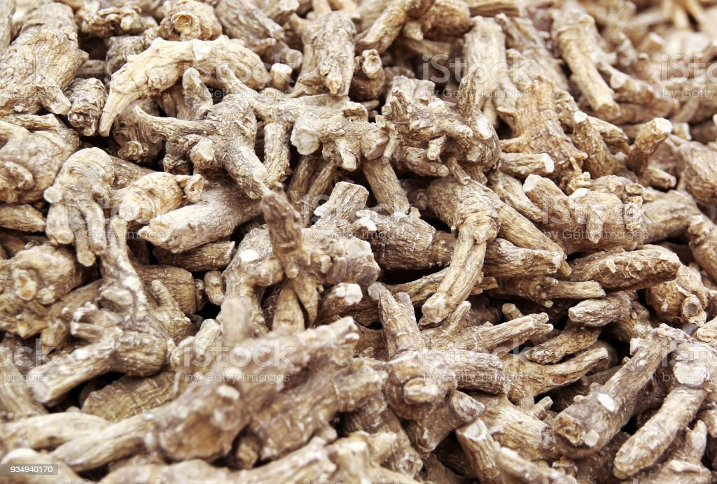 Chinese Herbal medicine - American Ginseng roots stock photo