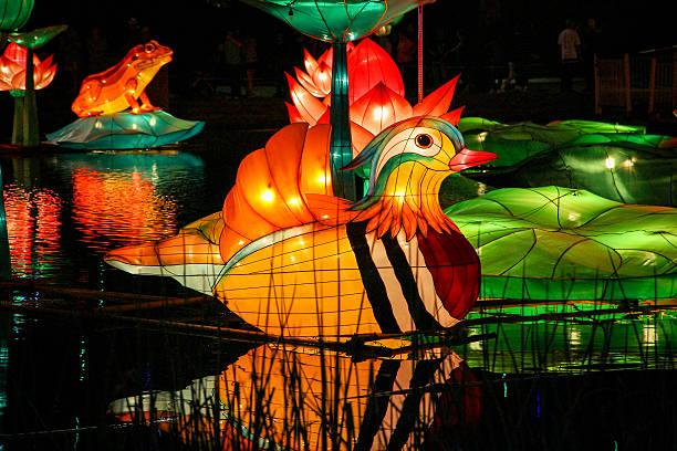 Chinese lantern duck stock photo