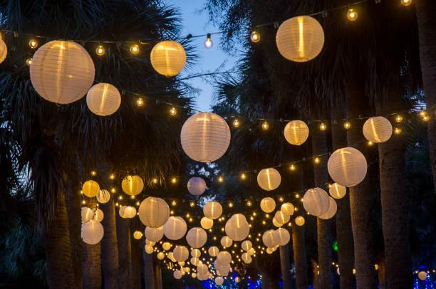 von palmen hängen lampions - palmengarten stock-fotos und bilder