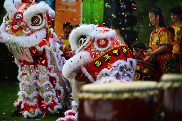 Chinese Lion dragon dancing during Chines New Year Holiday celebration stock photo