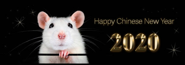 Chinese new year 2020. Year of the rat. Fortune. stock photo