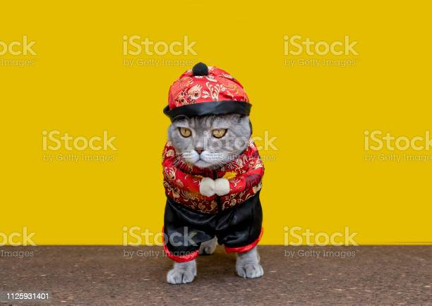 Chinese outfit costume with fat cat on cork table british sorthair picture id1125931401?b=1&k=6&m=1125931401&s=612x612&h=et8306ws mp fo6ha j1y4hqxcv lbgnfefgzalecf4=