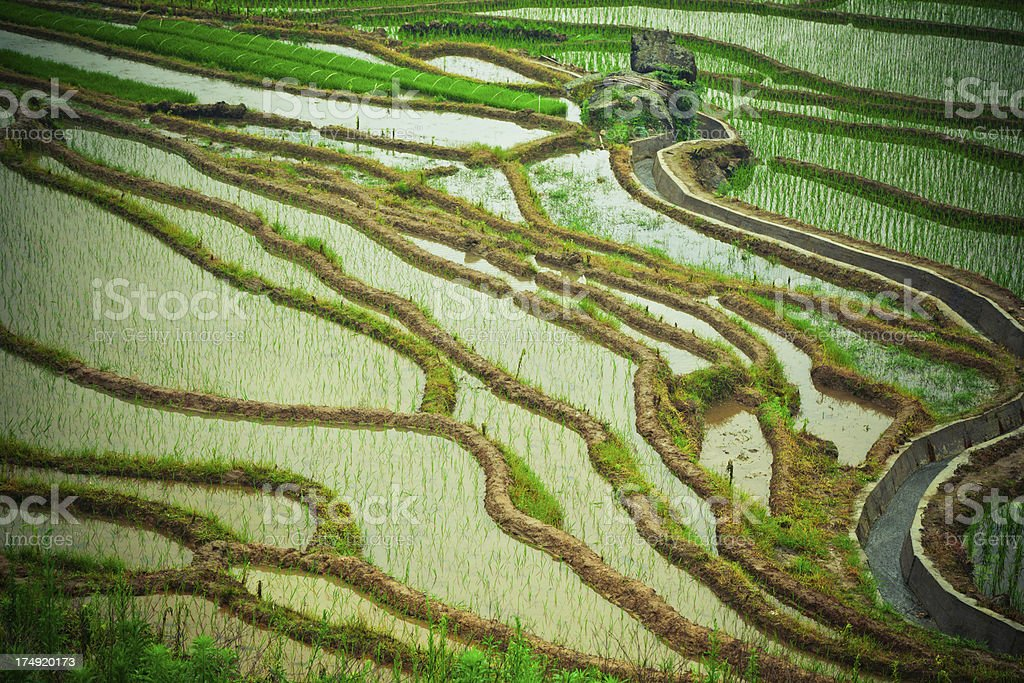 Chinese terraces royalty-free stock photo