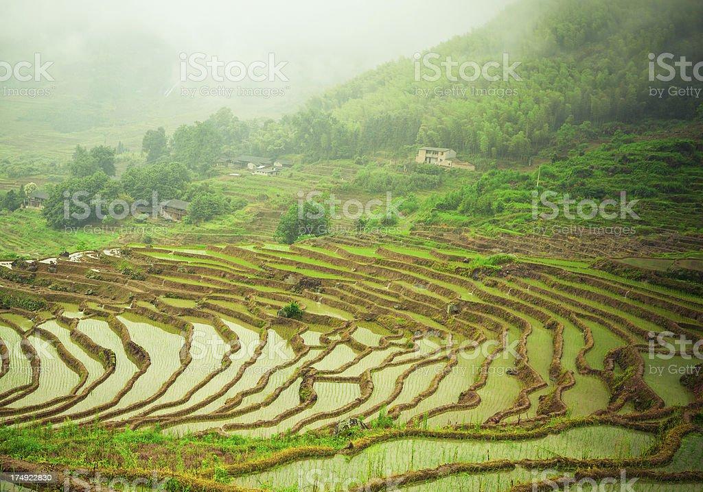 Las Terrazas China Foto De Stock Y Más Banco De Imágenes De