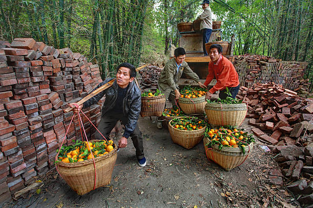 chinesische lkw entladen von orange sind in weidenkörben. - versandrolle stock-fotos und bilder