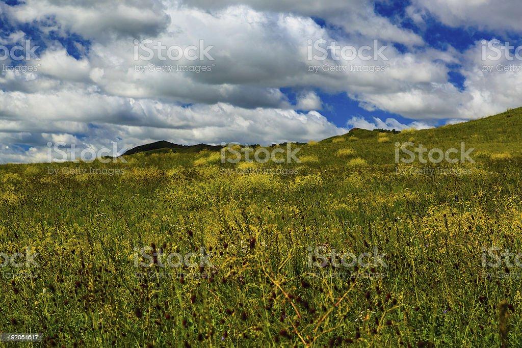 chinese Wulanbutong grassland stock photo
