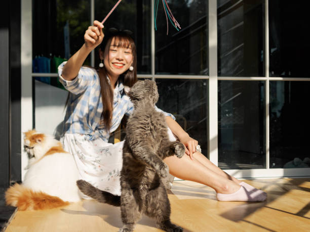 Chinese young girl play with several cats at home in sunny afternoon picture id954906044?b=1&k=6&m=954906044&s=612x612&w=0&h=tf6c3 kcnqcn7omg4tsu05px11z7hy3hdegcdrddlqg=